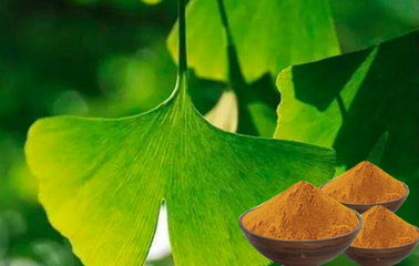 EP9.0 Natural Botanical Ginkgo Extracts With Advanced Extraction Technology