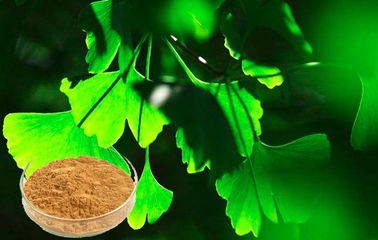 Botanical Herbal Ginkgo Biloba Extract For Auxiliary Hypolipidemic GMP Certificated
