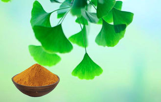 Water Soluble Natural Ginkgo Biloba 24 6 Extract For Cosmetics