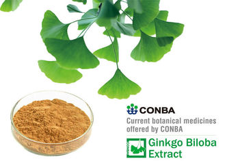 Yellow Brown Powder Natural Botanical Ginkgo Extracts With 36 Months Shelf Life