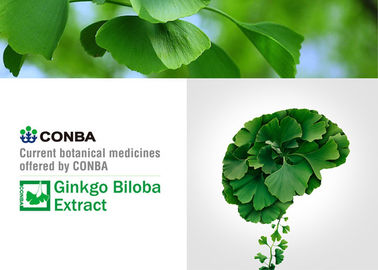 Water Soluble Ginkgo Standardized Extract , Antioxidant Ginkgo Biloba Extract
