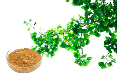 Pharmaceuticals Botanical Herbal Extract For Improving Mental Performance