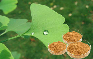 Pharmaceutical Grade EP9.0 Ginkgo Extract For Auxiliary Hypolipidemic