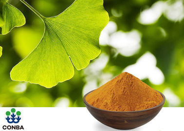 USP40 Ginkgo Biloba 24 6 Extract For Pharmaceutical Raw Materials